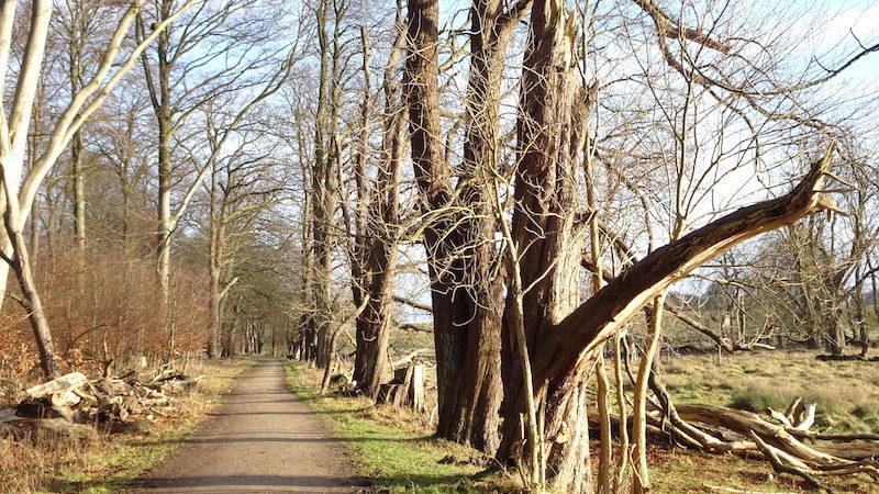 Ude mellem skovTræer i foråret